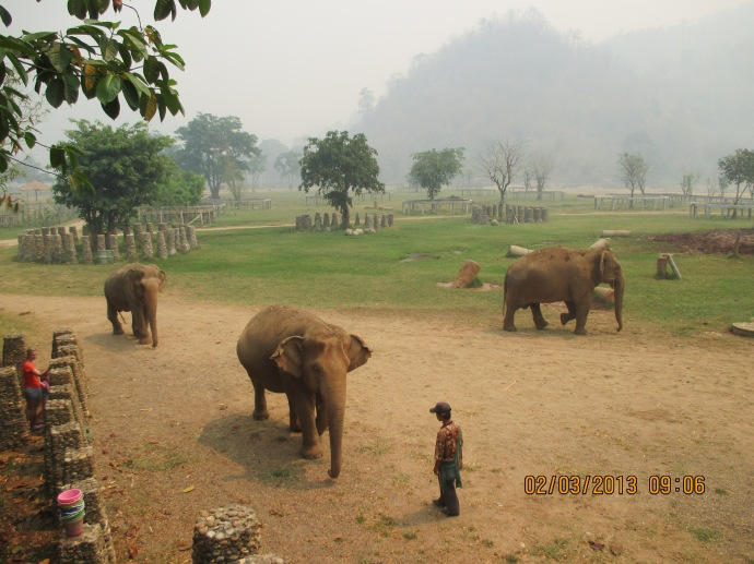 The wonderful, large property of Elephant Nature Park. The smoke in the background is from the slash and burn method the villagers use.
