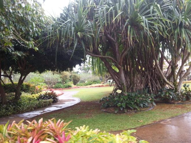 At the Dole plantation