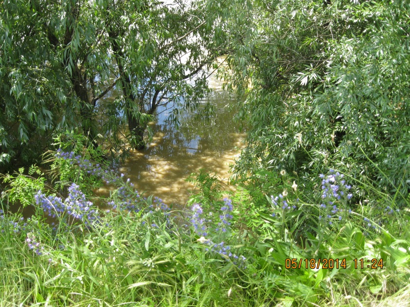 muddy waters that have overflowed the Danube river and are surrounding trees