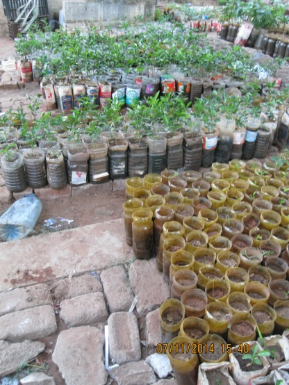 Plants for sale at the local market. (Finally, a use for all the plastic bottles).